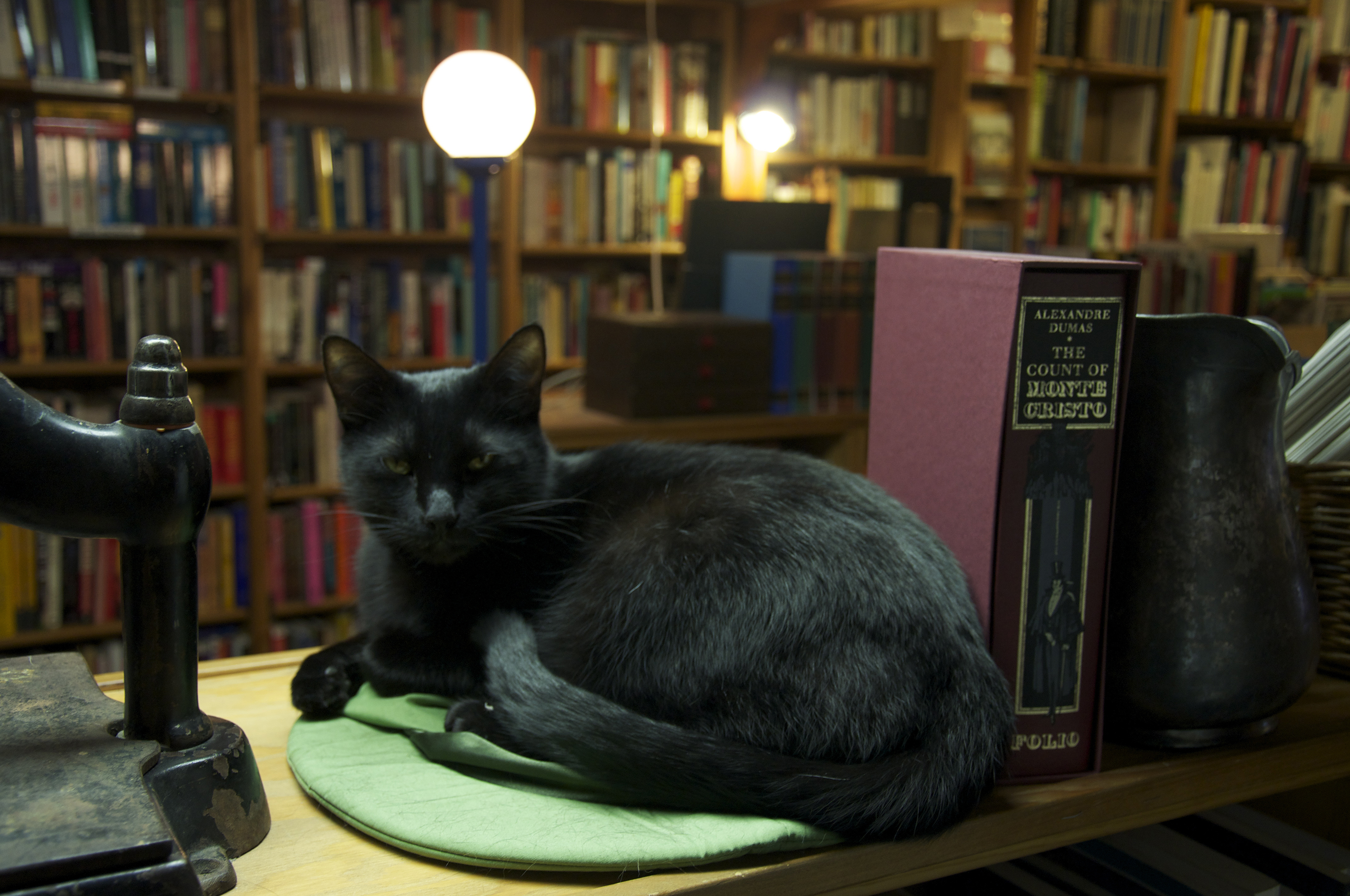 Seattle bookstore cat